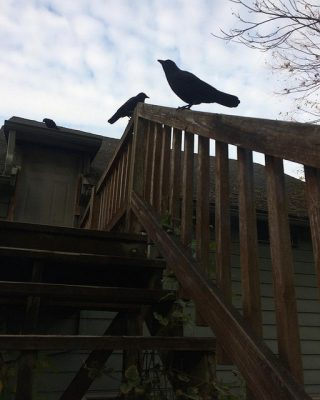 View from the bottom of a flight of wooden outdoor stairs. At the top of the railing sit two large crows.