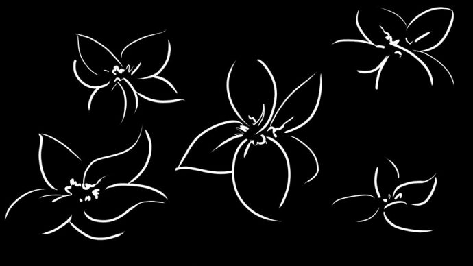 White, gestural lines of flowers on a black background. They're similar to, but not the same, as the flowers in the Starting the Design image.